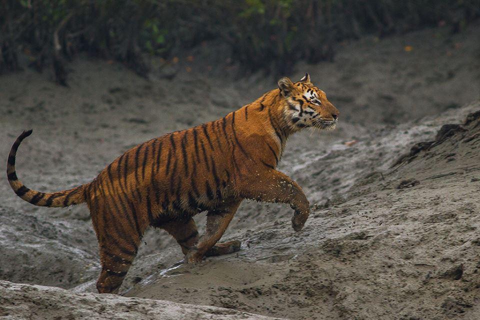 12494753_10153816059576753_9222713406992430251_n 3 Days 2 Night Sundarban Package Tour